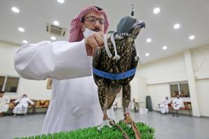 مشتري خريد شاهين در حراجي کويت