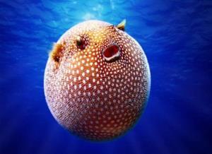 درمان چشم های تنبل با سم ماهی بادکنکی