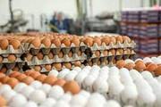 تخم مرغ هم لاکچري شد!