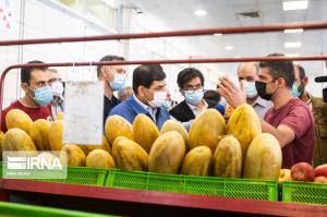گفتگوی مخبر با مردم در بازار میوه و ترهبار درباره قیمتها