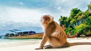 میمون سارقی که از غفلت یک خانم استفاده کرد!