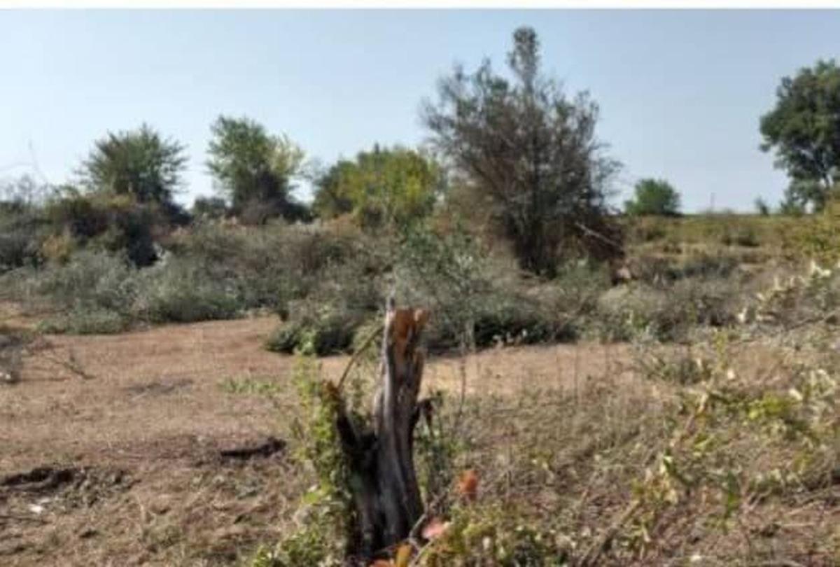قتلعام درختان در پارسآباد؛ سکوت قانون!