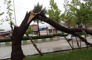 سقوط وحشتناک درخت بر روی عابران پیاده