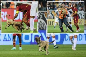 ورود یک سگ به درون زمین در سوپر لیگ ترکیه!