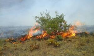 آتشسوزی در جنگلهای سالند دزفول