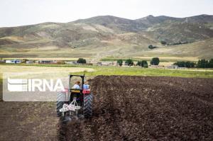جهاد کشاورزی مازندران خواستار رعایت زمانبندی کشت پاییزه شد