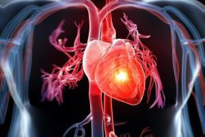 کدامیک برای قلب مفید است؛ از دست دادن چربی یا افزایش عضله؟