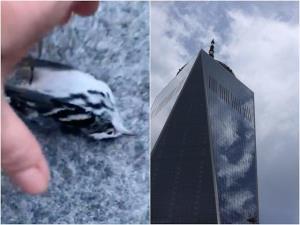 گوناگون/ مرگ دهها پرنده پس از برخورد با مرکز تجارت جهانی در آمریکا