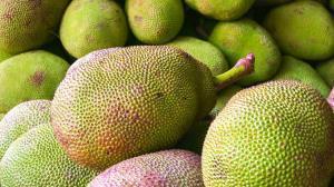 جک فروت، بزرگترین میوه دنیا