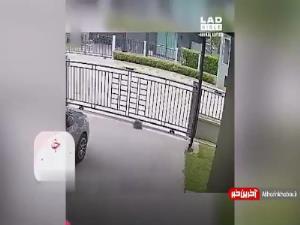 عبور عجیب یک لاکپشت از نرده ورودی خانه