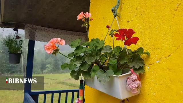 بارش باران در تابستان هوای گیلان را پاییزی کرد
