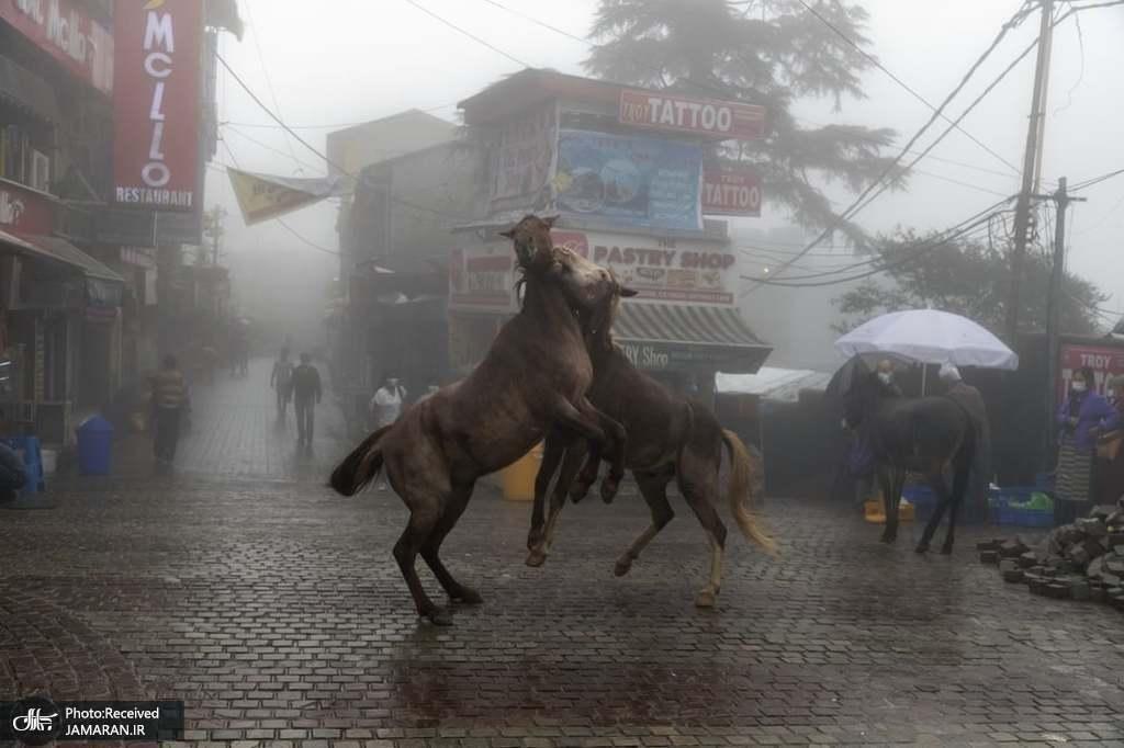 بازی دو اسب در یک روز بارانی