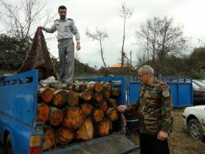 شغل دوم قاچاق چوب