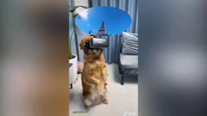 واکنش جالب سگ هنگام مشاهده با عینک واقعیت مجازی