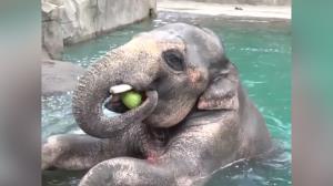 تصاویری جالب از هندوانه خوردن حیوانات