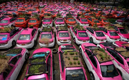 کاشت سبزه روی سقف تاکسی های بیکار شده در تایلند