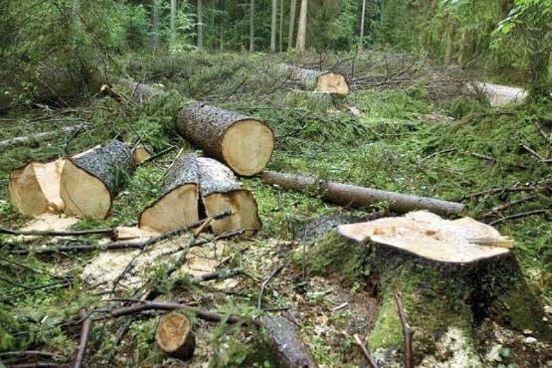 ۵۴ پرونده تخلف در عرصه منابع طبیعی گچساران تشکیل شد