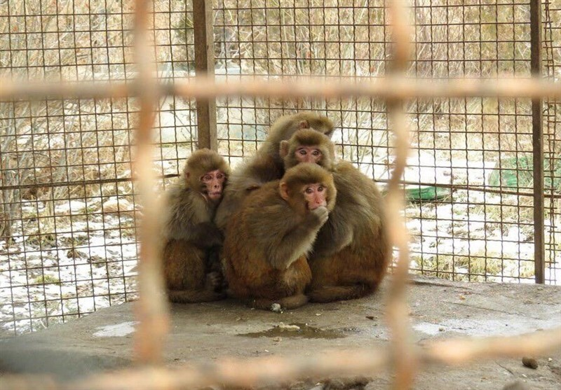 ماجرای نوزادی که نیمی از بدنش شبیه به میمون بود!