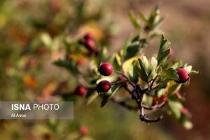طبیعت اردبیل در واپسین روزهای تابستان