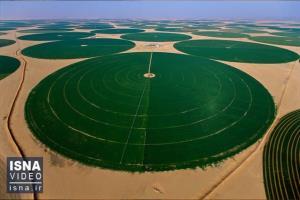 دایرههایی حاصلخیز در دل بیابان های عربستان!
