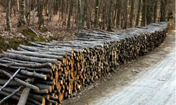 کشف ۱۰ تن چوب قاچاق در فامنین