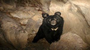 محیط زیست پیگیرِ مرگ خرس سیاه بلوچی در باغ وحش