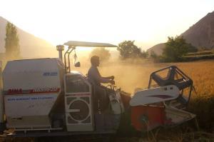 آغاز برداشت برنج در شهرستان درگز
