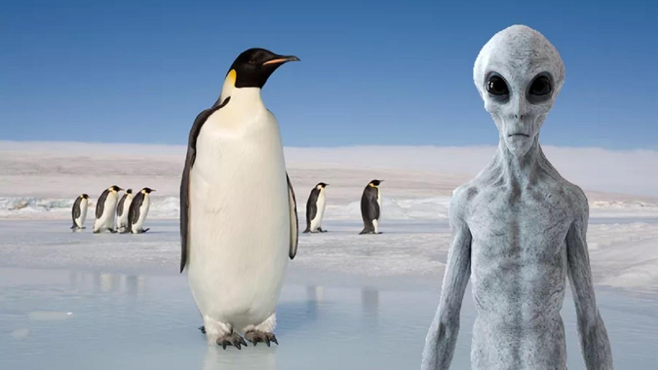 آیا پنگوئنها همان آدم فضاییها هستند؟