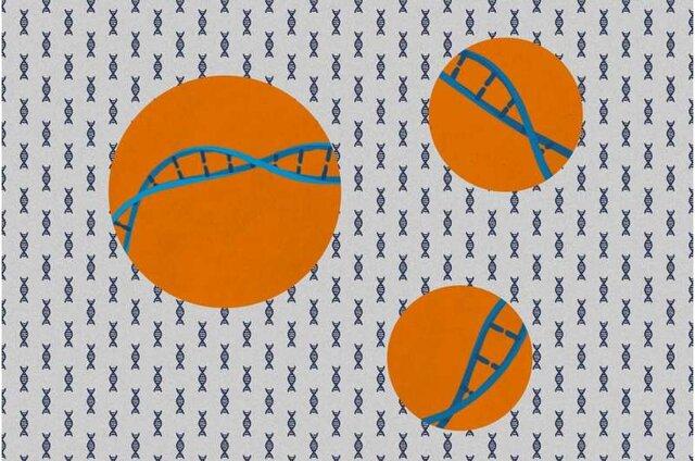 تولید داروی ضدافزایش وزن با غیرفعال کردن ژنهای عامل چاقی
