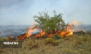 آتشی دوباره به جان جنگلهای سالند دزفول
