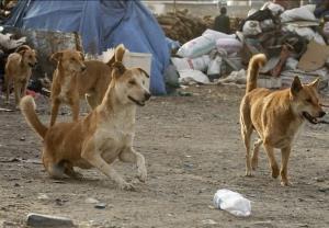 حمله سگ به تکنسین اداره دامپزشکی شوشتر