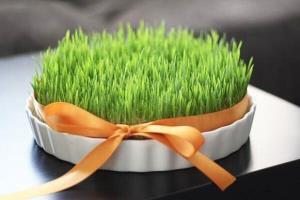 خواص فراوان سبزه گندم برای سلامتی