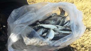 دستگیری صیاد غیرمجاز ماهی در بیجار