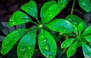تولید آب و برق از گیاهان توسط مخترع قزوینی