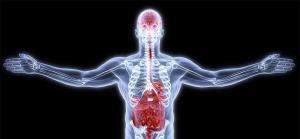 مغز دوم انسان کجاست؟