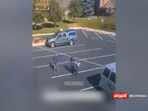 حمله سگ وحشی به دختر بچه