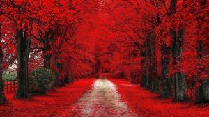 از تهران تا توکیو با درختی سلطنتی