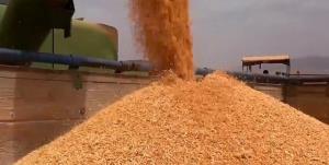ثبت رکورد جدید افزایش قیمت گندم در بازارهای جهانی