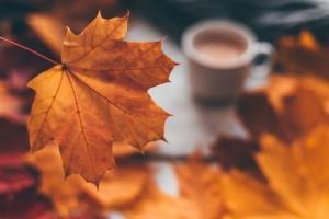چرا پاییز با غم و دلتنگی و ادا گره خوردهاست؟