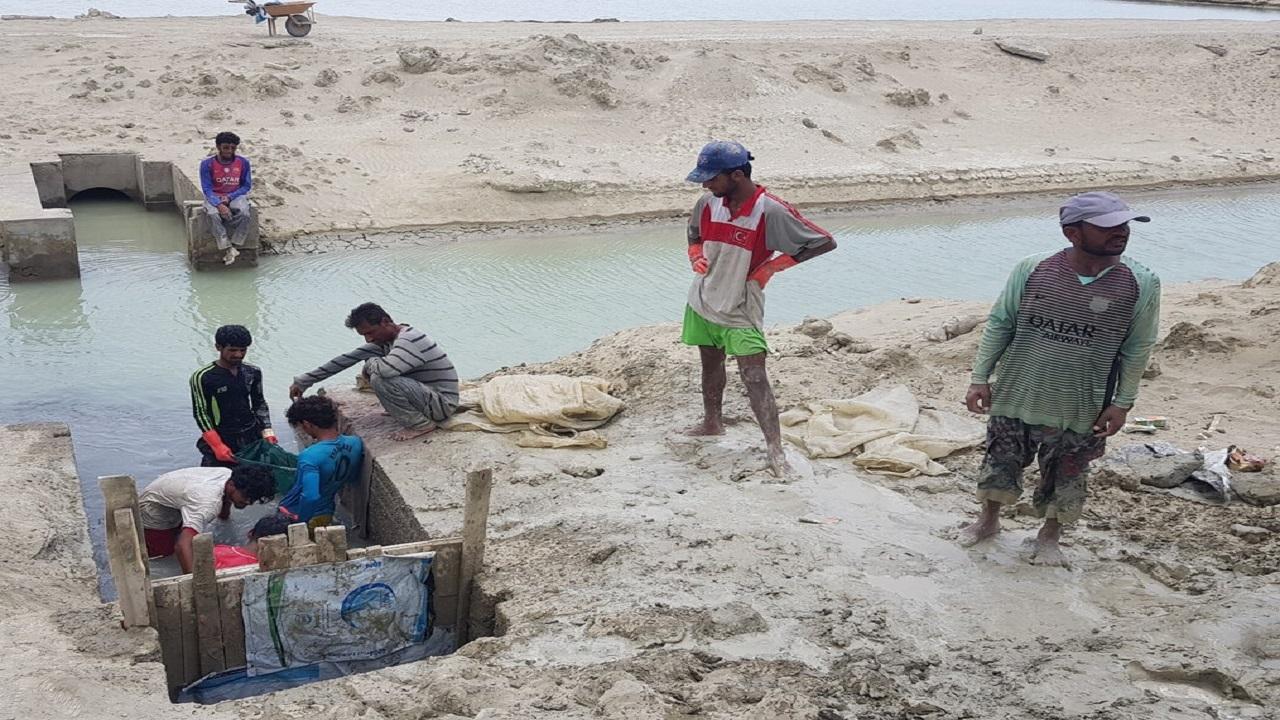 یک هزار تن میگو از استخرهای سواحل مکران برداشت شد