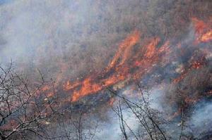 آتشسوزی شدید در جنگلهای کردکوی