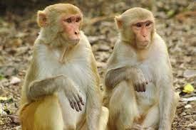 گروگانگیری سگ و گربه توسط میمونها!