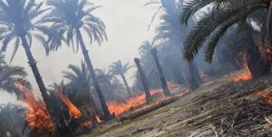 آتش به جان نخلستانهای پارسیان افتاد