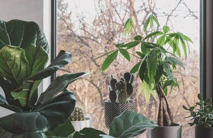 مراقبت از گیاهان آپارتمانی در فصل پاییز
