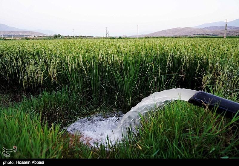 عکس/ بازگشت امید به شالیزارهای استان زنجان