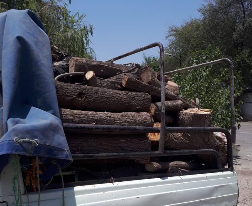 ۲.۵ تن چوب قاچاق در دلفان کشف شد