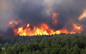 تازهترین اطلاعات درباره اجرای طرح جامع مدیریت حریق در جنگلهای کشور
