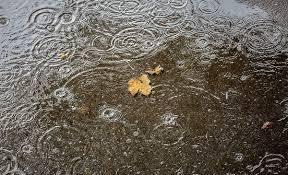 آغازین روزهای پاییز مازندران با جامه زمستانی