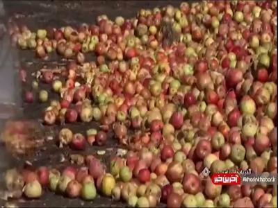 داستان تلخ سیب های صنعتی
