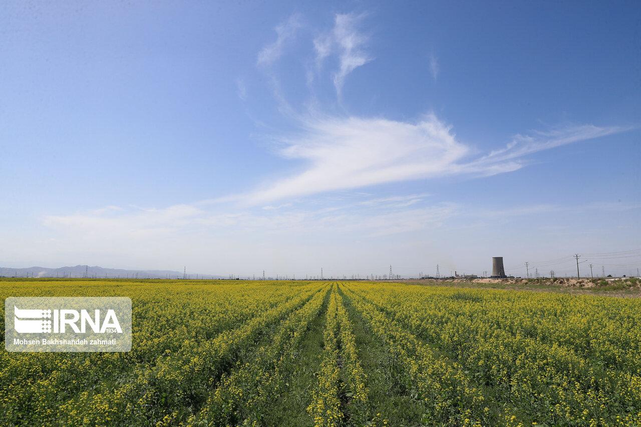 طرح جهش تولید در دیمزارهای قزوین کلید میخورد